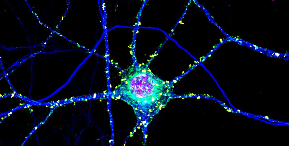 Signaling in neurons